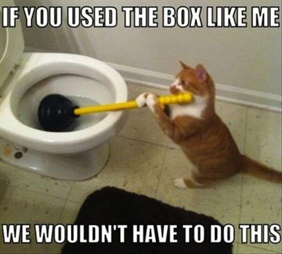 Meme of a cat plunging a toilet.